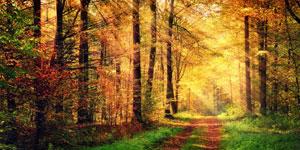 Wohlbefinden_auch_im_Herbst